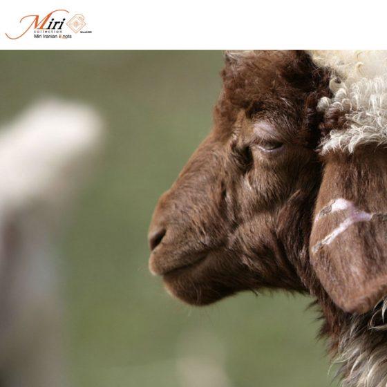 ペルシャ絨毯販売店のサイト制作